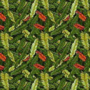 Redwood Leaves