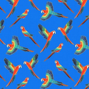 Red Macaws - Electric Blue  (Small Version - Coordinate Pattern)