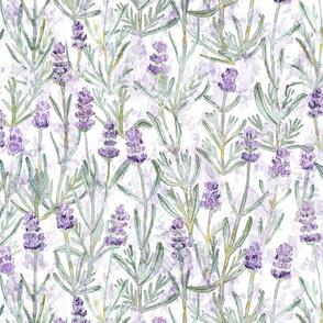 Medium/Large Lavender