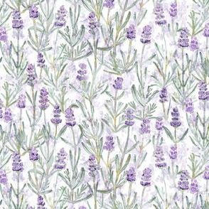 Medium Lavender