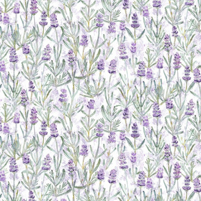 Medium/Small Lavender