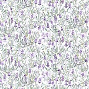Small Lavender