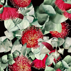 Eucalyptus Rhodantha -Rose Mallee