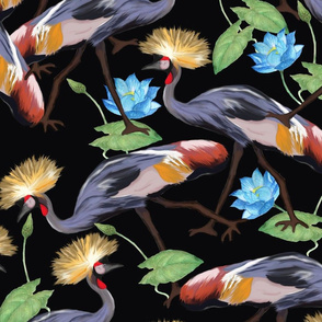 grey crowned crane-large
