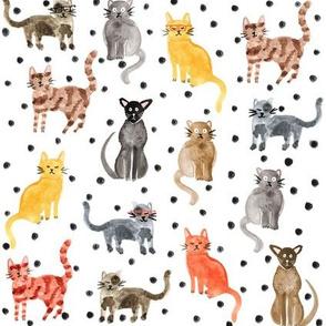 Dotty For Cats - Spotty