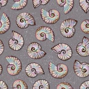 Iridescent Ammonites - Fossil Pattern