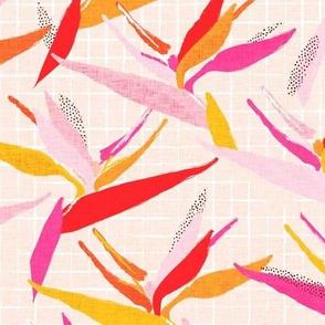 Hot Pink Bird of Paradise