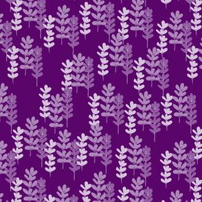 Lavender filled field