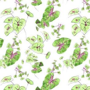 Caladium Leaves Tossed