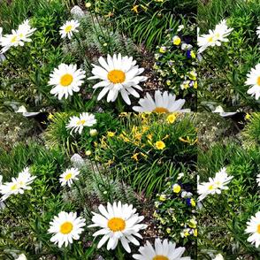Sunflowers Along a Path