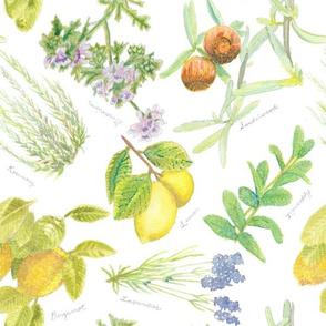 Aromatherapy plants