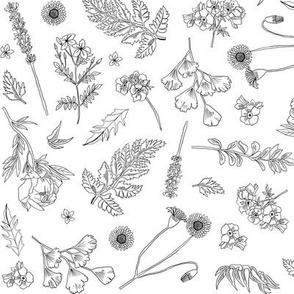 Wild Flowers Monochrome - White Background