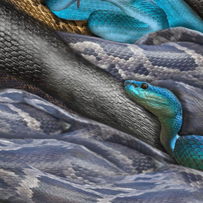 Double color blue, black and yellow-brown Reptiles