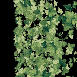 Romantic English Ivy Border Print ~ Black