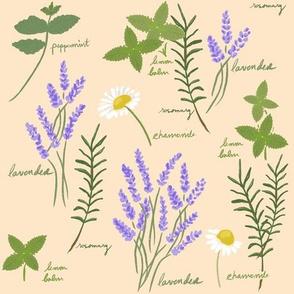 Aromatherapy Garden