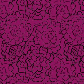 wild roses in fuchsia