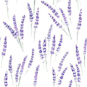 Lavender watercolor