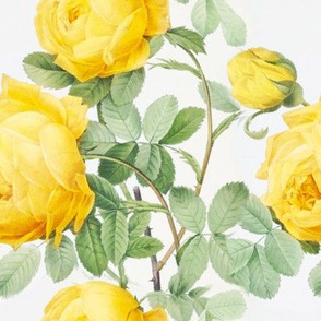 Yellow vintage roses (large)