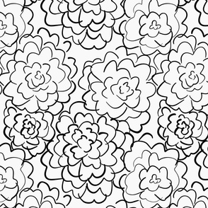 wild roses in white