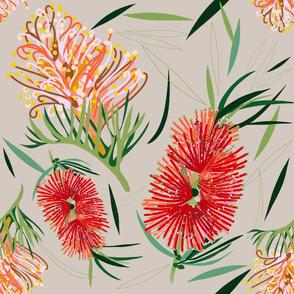 Grevillea and bottle brush flowers