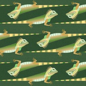 iguanas on green