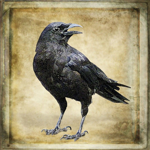 Black Crow on Painted Background