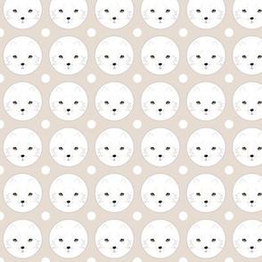 renard blanc - White fox