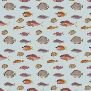 poissons, orange and pink on blue