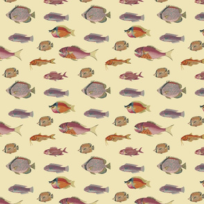 poissons, orange and pink on yellow