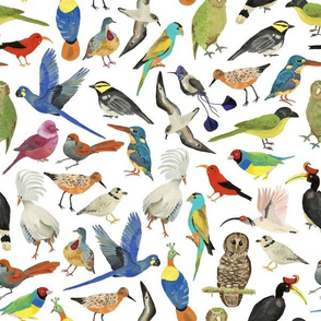 Endangered BirdsSMALL