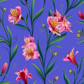 Lily of Peru Blue