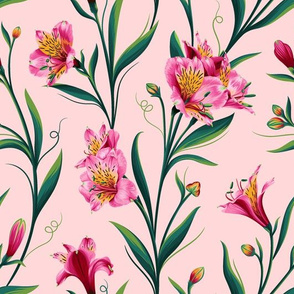 Lily of Peru Pink