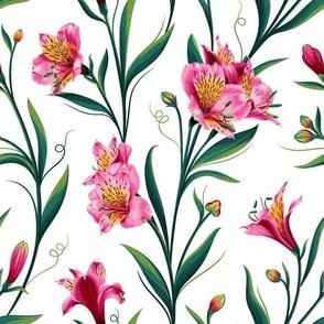 Lily of Peru White