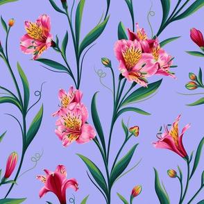 Lily of Peru Violet