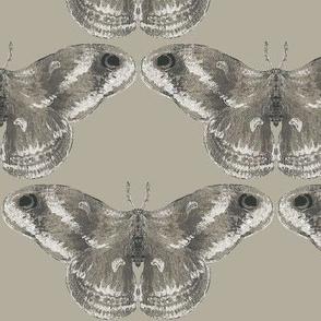 Rich Mystic Moth Gray Area