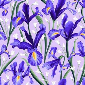 Iris Blue & Bluebells Violet