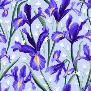 Iris blue & Bluebells Lightblue