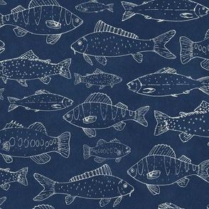 Freshwater Fish Bass Carp Trout Salmon Perch