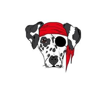 pirat dog