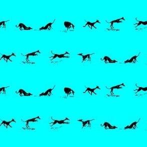 diamond dogs turquoise_dark dogs
