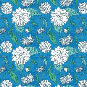White dahlia on blue