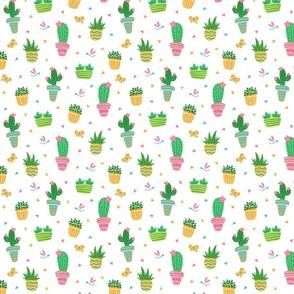 Super Cute Succulents