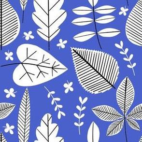Houseplant Cuttings- Cobalt