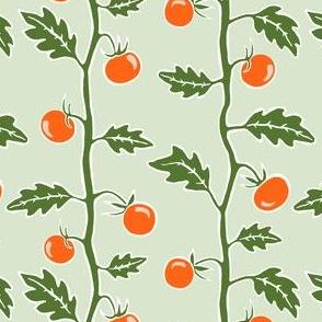 tomato plant - sage