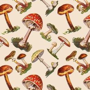 Mushrooms Shrooms Forest