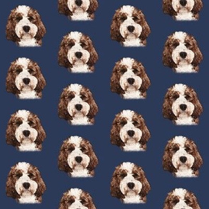 Red & White Cockapoo on Blue