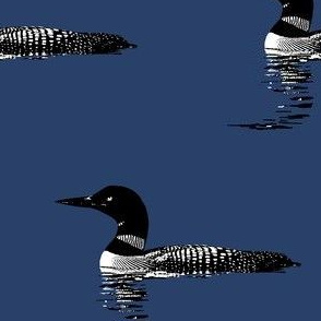 Loon silhouette - black and white on navy