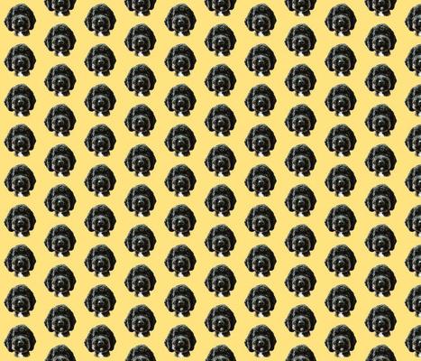 Black Cockapoo on Yellow