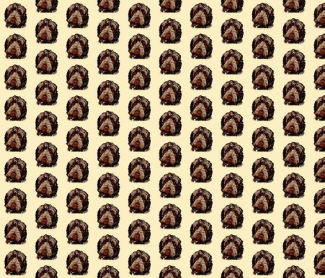 Chocolate Cockapoo on Pale Yellow