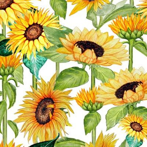sunflower watercolor floral